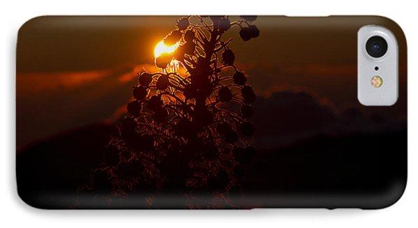 Ahinahina - Silversword - Argyroxiphium Sandwicense - Sunrise On The Summit Haleakala Maui Hawaii  Phone Case by Sharon Mau