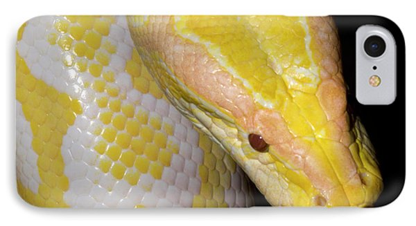 Albino Burmese Python IPhone 7 Case by Nigel Downer
