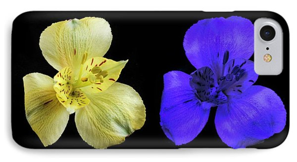 Alstroemeria Flowers In Uv And Daylight IPhone Case by Science Photo Library