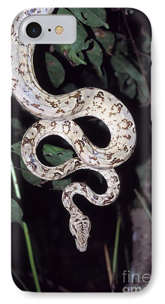 Amazon Tree Boa IPhone Case by James Brunker