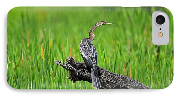 American Anhinga IPhone Case by Al Powell Photography USA