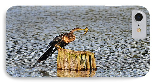 American Anhinga Angler IPhone Case by Al Powell Photography USA