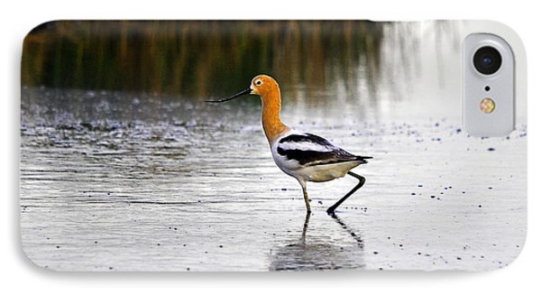 American Avocet Phone Case by Al Powell Photography USA