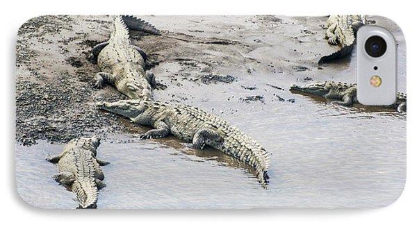 American Crocodiles (crocodylus Acutus) IPhone Case by Photostock-israel