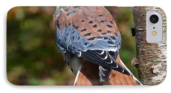 IPhone Case featuring the photograph American Kestral Portrait by Rodney Campbell