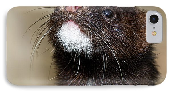American Mink In The Uk IPhone Case by Mr Bennett Kent
