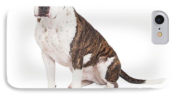 American Staffordshire Terrier Cross Dog Sitting IPhone Case by Susan Schmitz