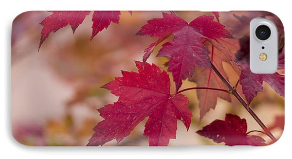 Among Maples IPhone Case by Chad Dutson