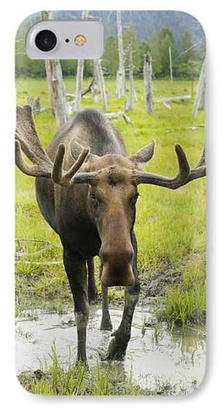 An Elk Standing In A Puddle Of Water Phone Case by Doug Lindstrand