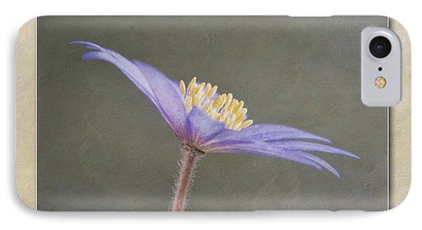 Anemone Blanda Blue Shades IPhone Case by John Edwards