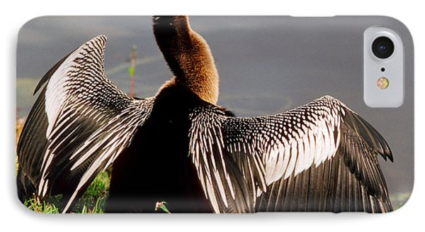 Anhinga Anhinga Anhinga Drying Plumage IPhone Case by Millard H. Sharp
