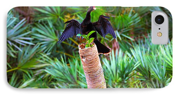 Anhinga Anhinga Anhinga On A Tree IPhone Case by Panoramic Images