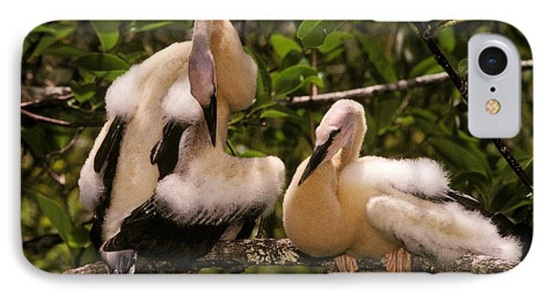 Anhinga Chicks IPhone Case by Ron Sanford