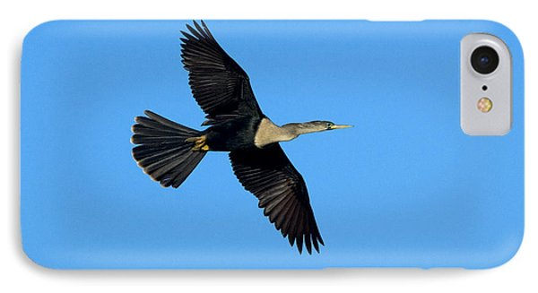 Anhinga Female Flying IPhone Case by Anthony Mercieca
