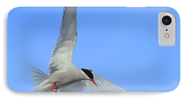 Antarctic Tern Phone Case by Tony Beck