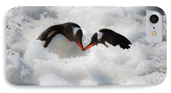 Antarctica A Pair Of Gentoo Penguins IPhone Case by Janet Muir