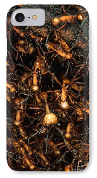 Army Ant Bivouac Site IPhone Case by Gregory G. Dimijian, M.D.