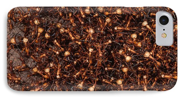Army Ants IPhone Case by Art Wolfe