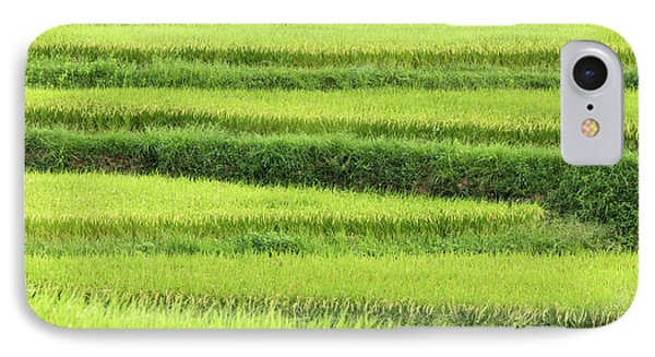 Asia, Japan Rice Terraces In Nara IPhone Case by Jaynes Gallery