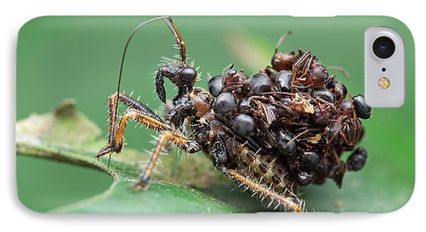 Assassin Bug Nymph With Ants IPhone Case by Melvyn Yeo