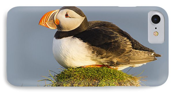 Atlantic Puffin Iceland IPhone Case by Peer von Wahl