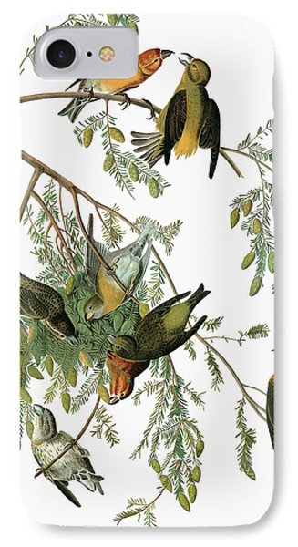 Audubon Crossbill IPhone Case by Granger