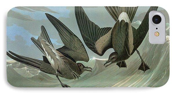 Audubon Petrel IPhone Case by Granger