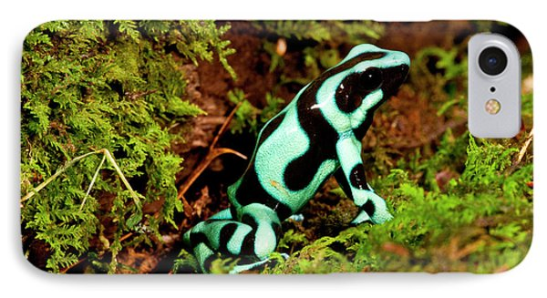 Auratus Dart Frog Dendrobates Auratus IPhone Case by David Northcott
