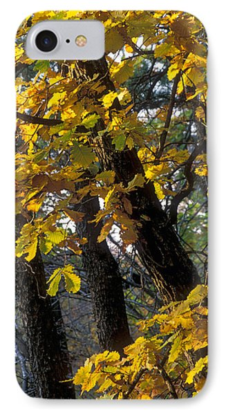Autumn IPhone Case by Anonymous
