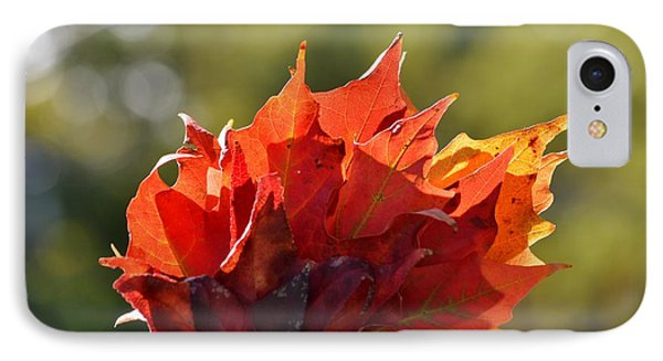 Autumn Flower IPhone Case by Sonali Gangane
