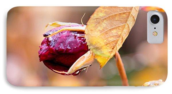 Autumn Rosebud IPhone Case by Rona Black