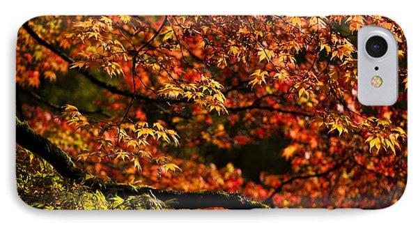 Autumn's Glory Phone Case by Anne Gilbert