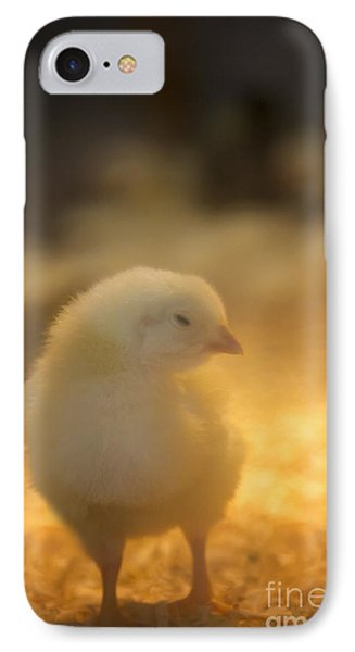 Baby Chick IPhone Case by Margie Hurwich