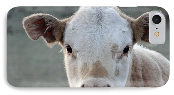 Baby Cow In Colorado IPhone Case by Dan Sproul