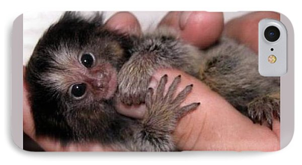 Baby Finger Monkey Light Background IPhone Case by L Brown