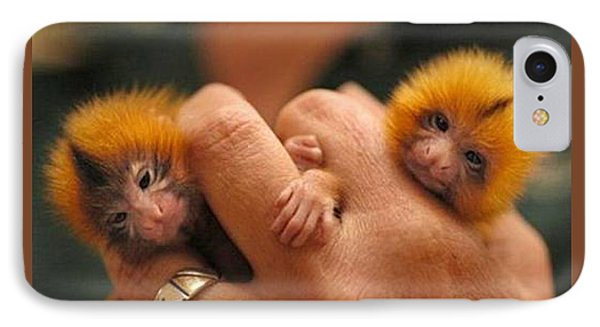 Baby Finger Monkeys Brown Border IPhone Case by L Brown