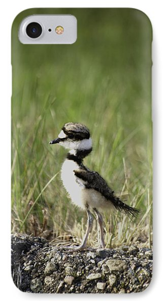 Baby Killdeer 2 IPhone Case by Thomas Young