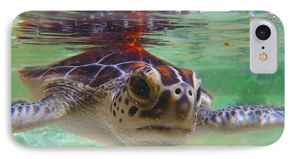 Baby Turtle IPhone Case by Carey Chen