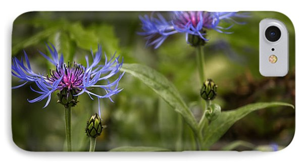 Bachelor Buttons - Flowers IPhone Case by Belinda Greb