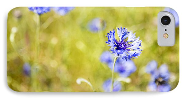 Bachelor Buttons Glowing IPhone Case by Belinda Greb