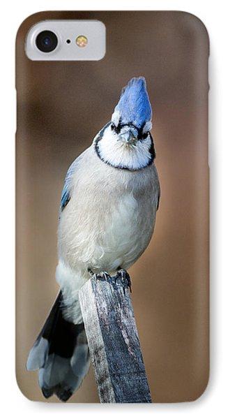 Backyard Birds Blue Jay IPhone Case by Bill Wakeley