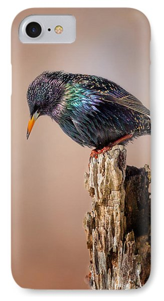 Backyard Birds European Starling IPhone 7 Case by Bill Wakeley