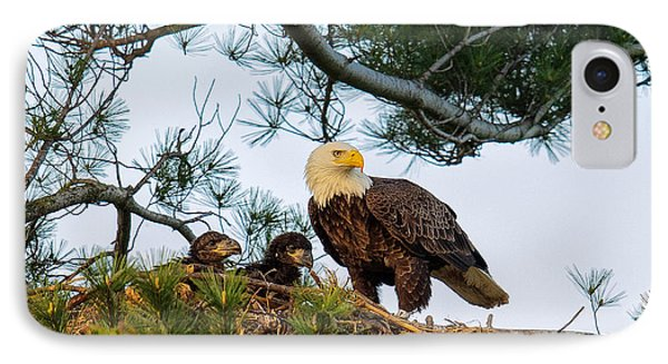 Bald Eagle With Eaglets  IPhone 7 Case by Everet Regal