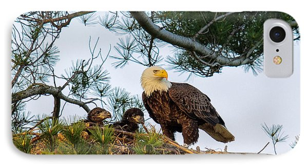 Bald Eagle With Eaglets  IPhone Case by Everet Regal
