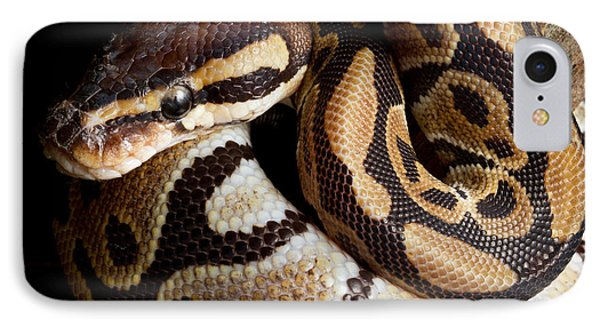 Ball Python Python Regius IPhone 7 Case by David Kenny