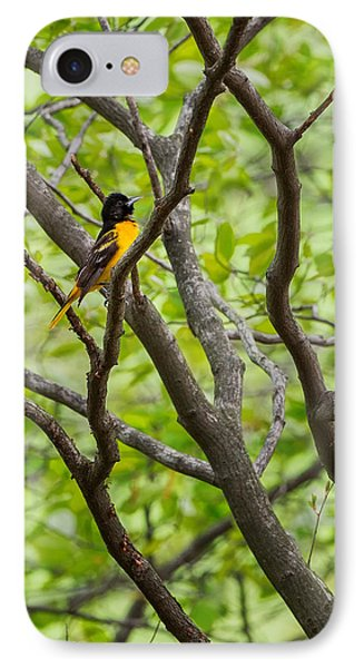 Baltimore Oriole IPhone 7 Case by Bill Wakeley