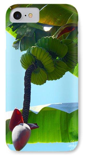 Banana Stalk IPhone 7 Case by Carey Chen