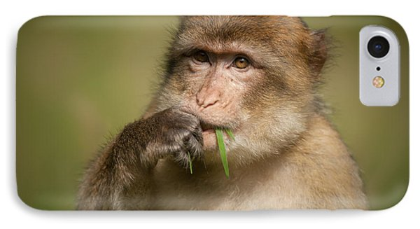Barbary Macaque Phone Case by Andy Astbury