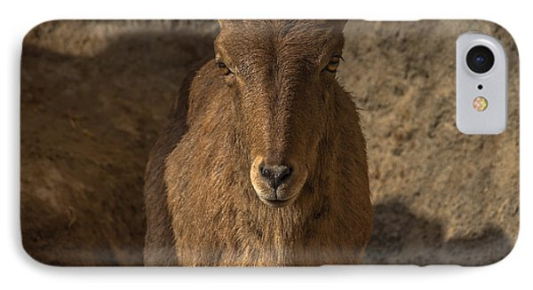 Barbary Sheep IPhone Case by Chris Fletcher