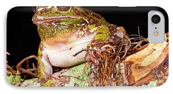 Barking Treefrog Hyla Gratiosa Native IPhone Case by David Northcott